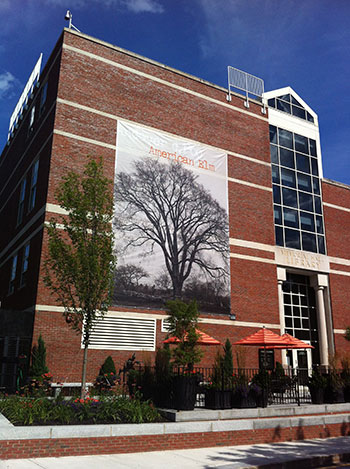 American Elm on building