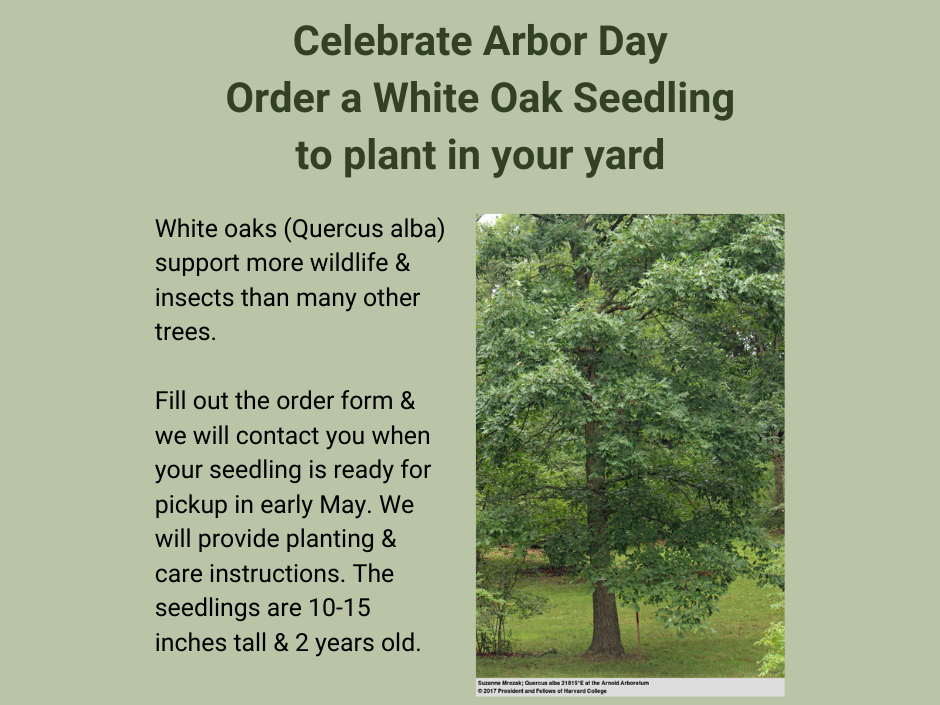 Arbor Day White Oak Tree Seedling Giveaway