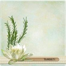 Tranquility Lotus Flower