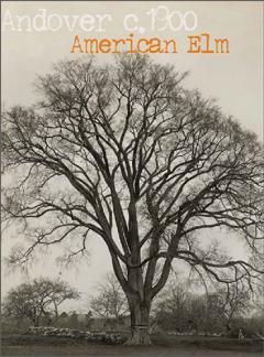 American Elm, Andover, circa 1900