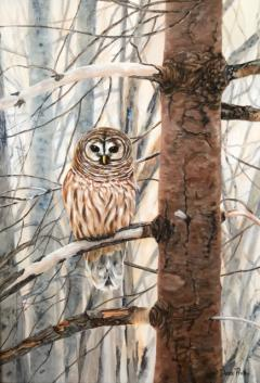 Donna Price barred owl