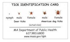 tick id card