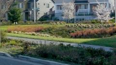stormwater landscaping
