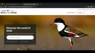 Birds of the World Online